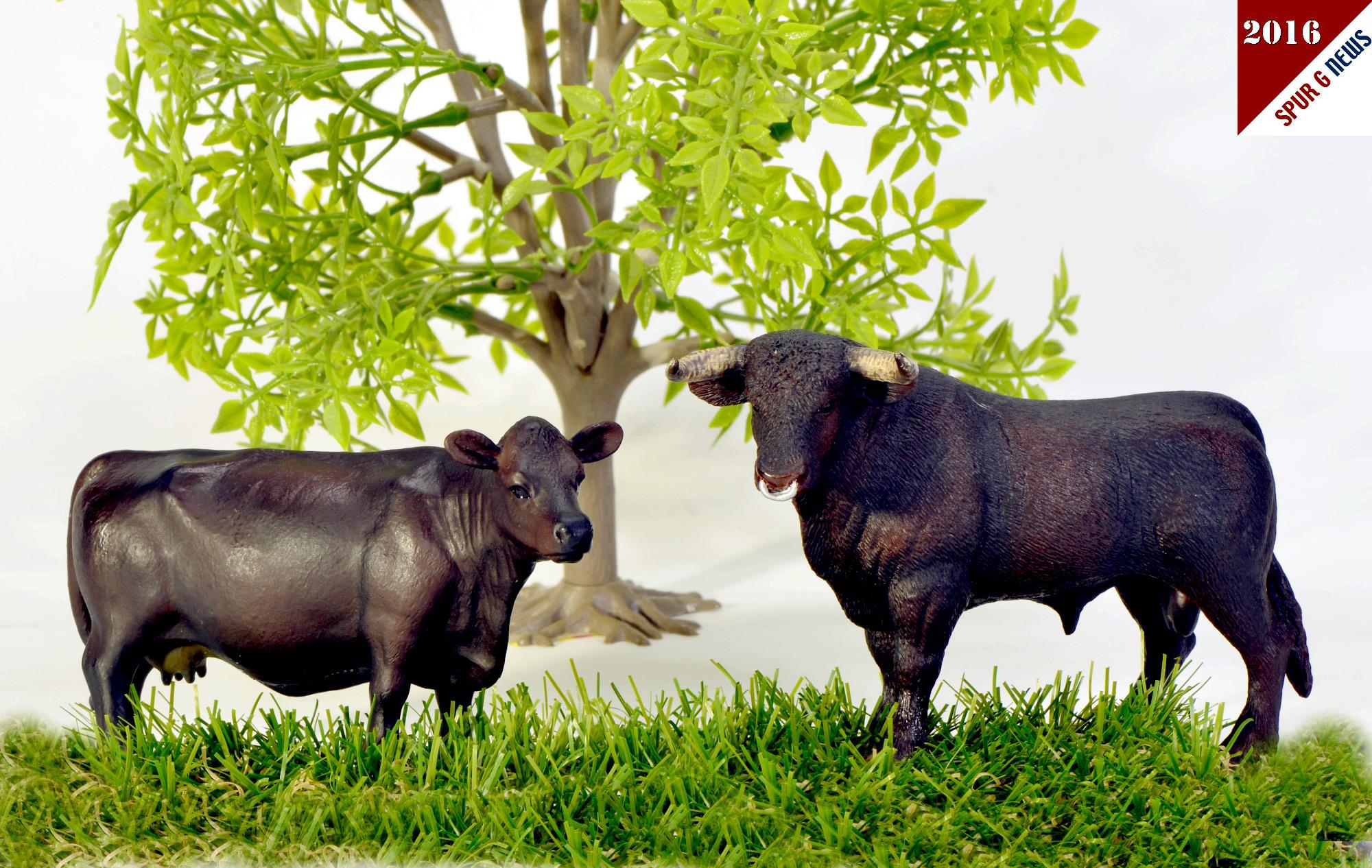 Bullen und Kuh beim Sex